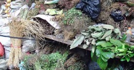 Herb Stall in China